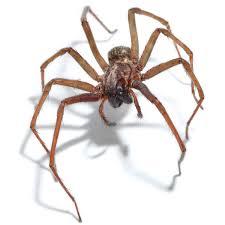 ترس شدید از عنکبوت
