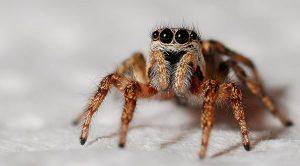 فوبی عنکبوت